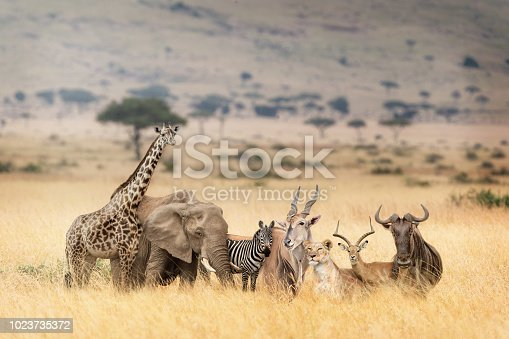 Fantasy scene of a group of wild African safari animals together in the grasslands of the Masai Mara in Kenya, Africa