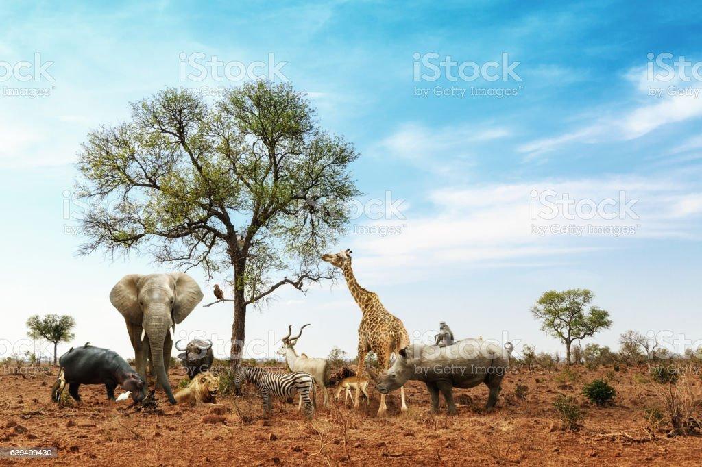 African Safari Animals Meeting Together Around Tree royalty-free stock photo