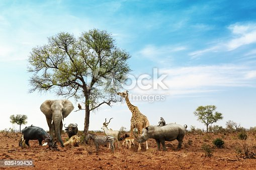 istock African Safari Animals Meeting Together Around Tree 639499430