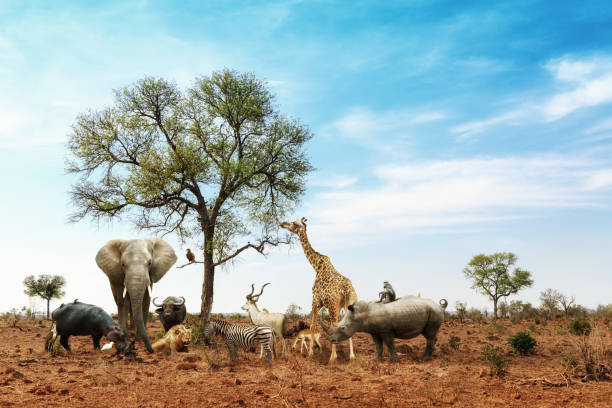 african safari animals meeting together around tree - faune sauvage photos et images de collection