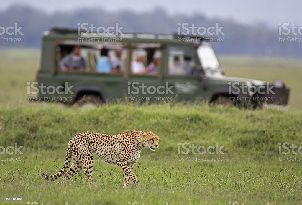African safari stock photo