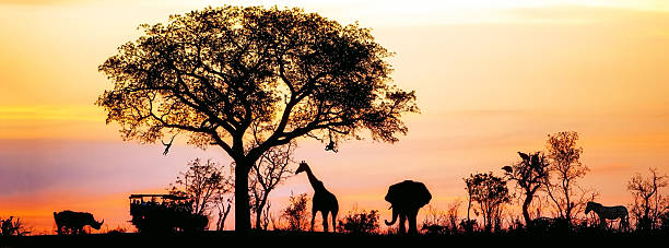 African Safari Silhouette Banner Silhouette of African safari scene with animals and vehicle kruger national park stock pictures, royalty-free photos & images