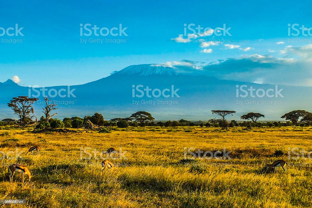 African savanna stock photo