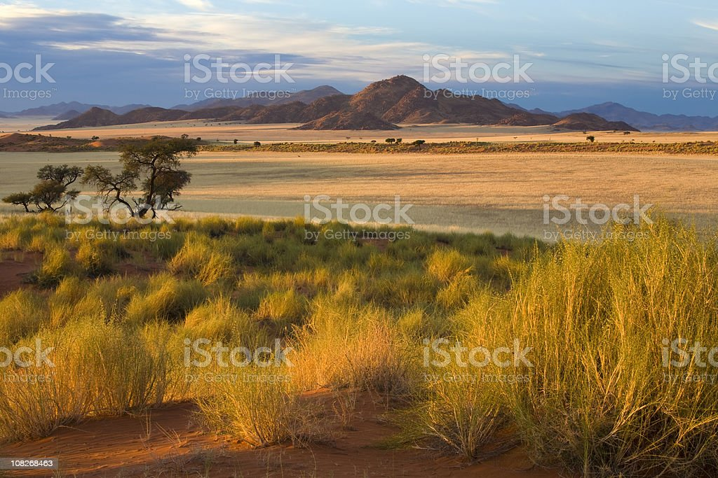 African Savannah at Sunset stock photo