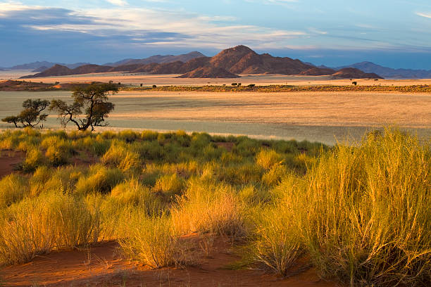 African Savannah at Sunset  namibia stock pictures, royalty-free photos & images
