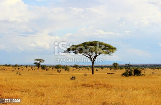 African savannah landscape in Tsavo East National Park, Kenya