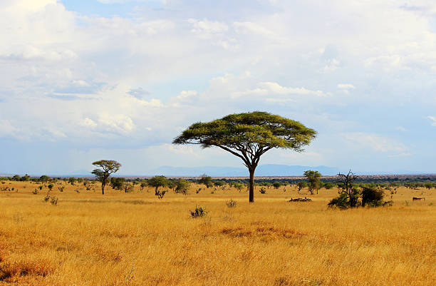 African savannah in Kenya African savannah landscape in Tsavo East National Park, Kenya east africa stock pictures, royalty-free photos & images