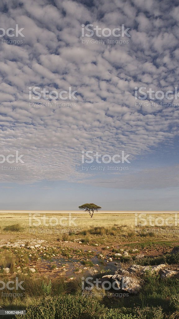 African Savannah stock photo
