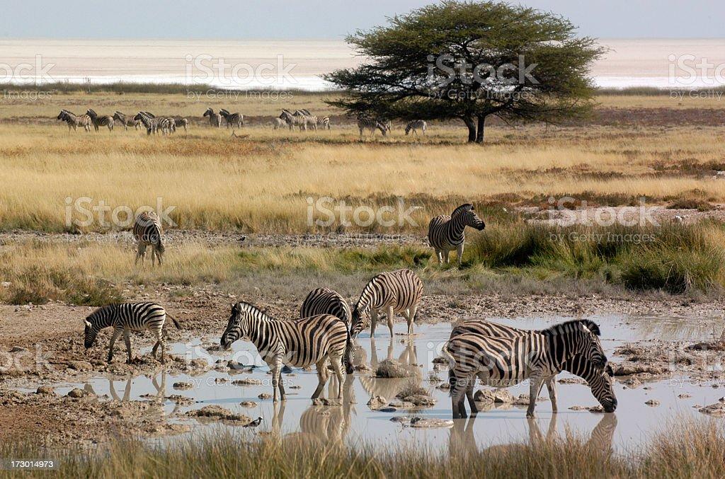 African scene stock photo