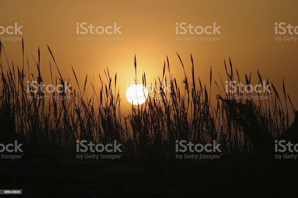 African Sun royalty-free stock photo