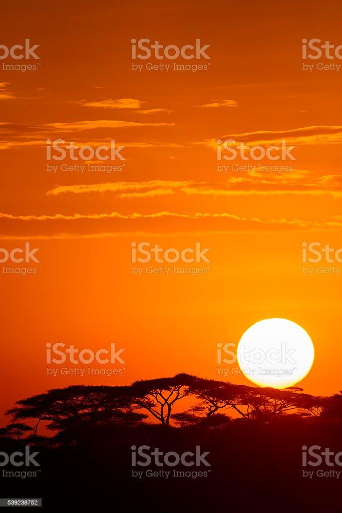 Africano sunrise foto de stock libre de derechos