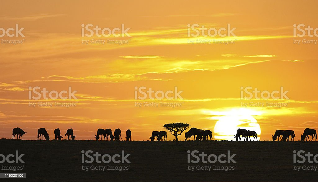 African sunrise with the silhouette of animals stock photo