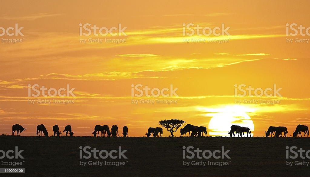Afrikanischer Sonnenaufgang – Foto