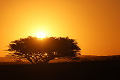 African sunset behind a tree