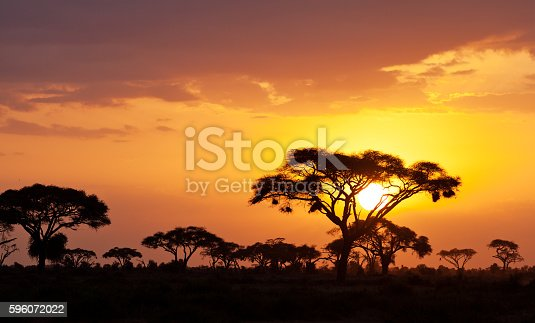A farmer wearing a hat looks out over the Australian bush as the sunsets in the outback