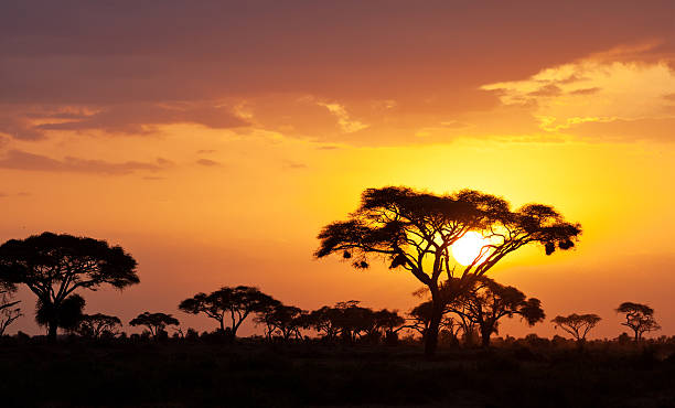 African sunset Typical african sunset with acacia trees in Masai Mara, Kenya masai mara national reserve stock pictures, royalty-free photos & images