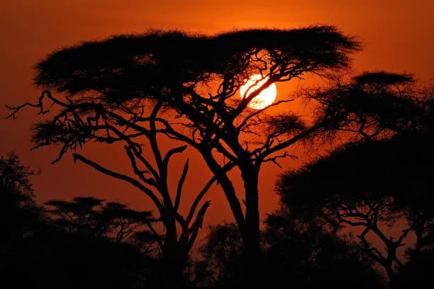 African sunset picture id660714942?b=1&k=6&m=660714942&s=612x612&w=0&h=csxapcbeu2nevqbdwi8s8a3boo p4pdnl9kfyra   g=