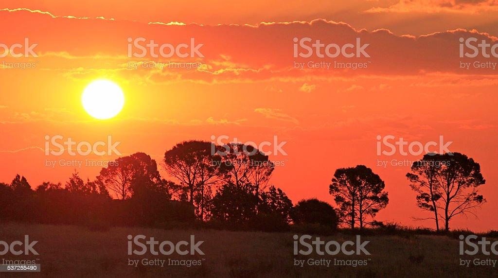 African sunset sun trees silhouette dusk dawn day night stock photo