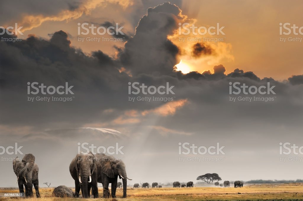 African sunset with elephants stock photo