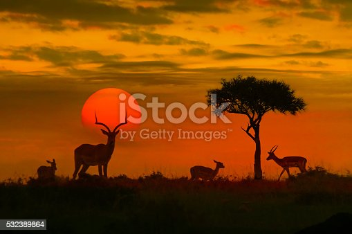istock African sunset with silhouette 532389864