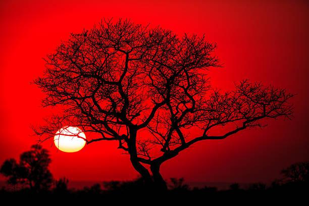 African tree silhouette picture id584879864?b=1&k=6&m=584879864&s=612x612&w=0&h=w83xg 04vl87jvg2 a3ihrupi759j rtxw95uq0nlis=