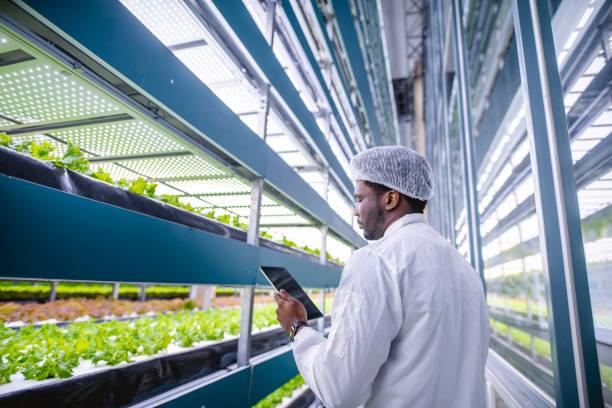 Afrikanische vertikale Farmer prüfen Indoor-Crop-Entwicklung – Foto