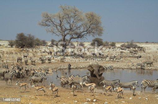 Africa Namibia , Etosha National Park A mass of animals at the waterhole.