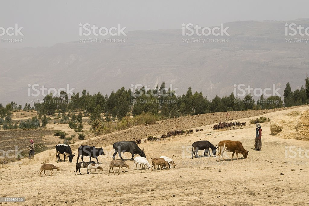 African way of farming in Ethiopia royalty-free stock photo