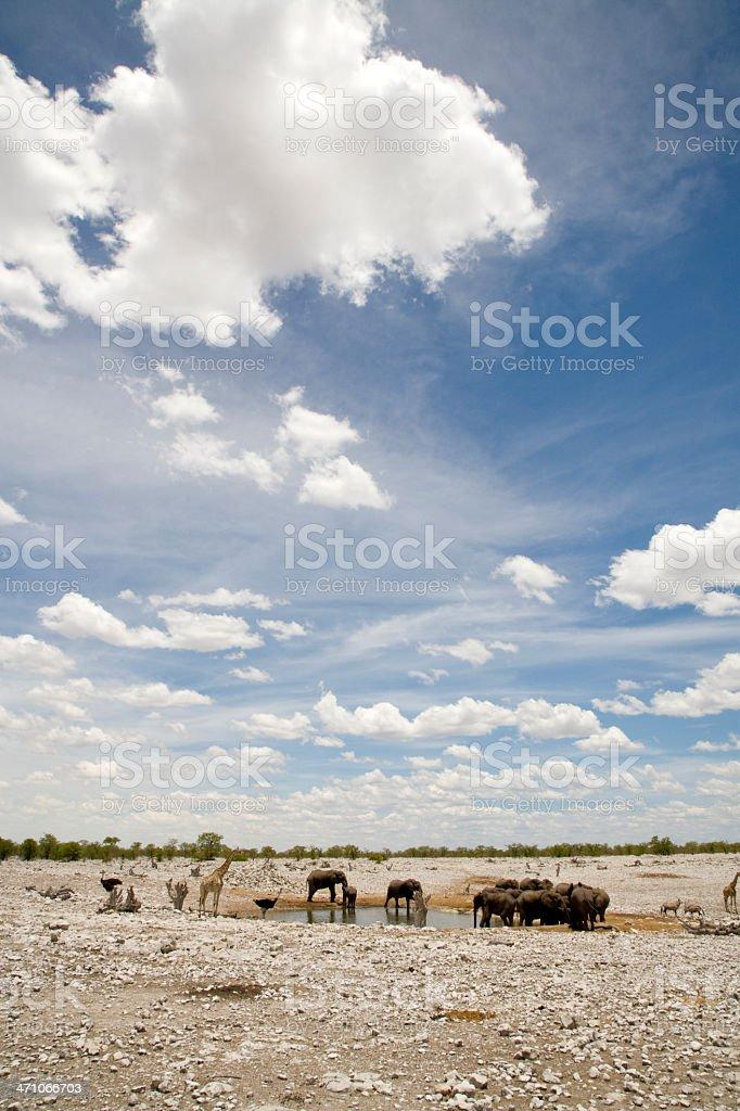 African Wildlife royalty-free stock photo