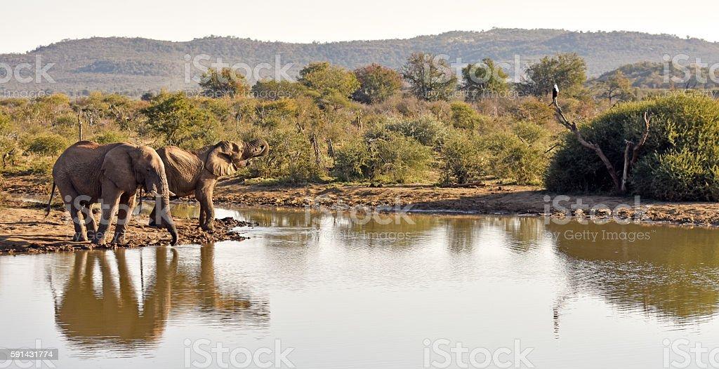 Afrikanische wildlife – Foto