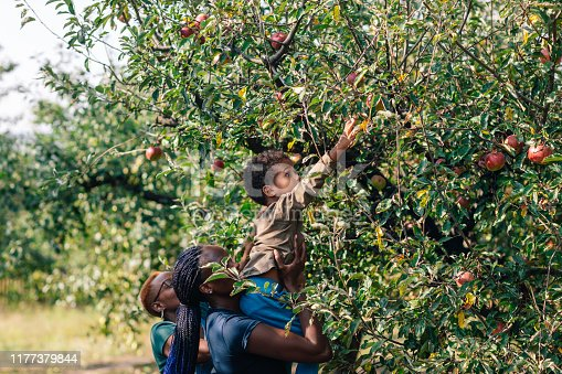 African woman and her son picking up apples in orchard in autumn.