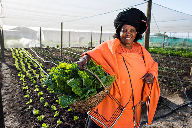 African Woman holding vegetables stock photo