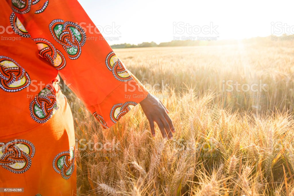 African woman in traditional clothes walking with her hand touching field of barley or wheat crops at sunset or sunrise stock photo