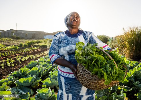Adult African Female wearing Traditional clothes and face paint holds back her head and laughs , holding a basket filled with vegetables, spinach, she has harvested.