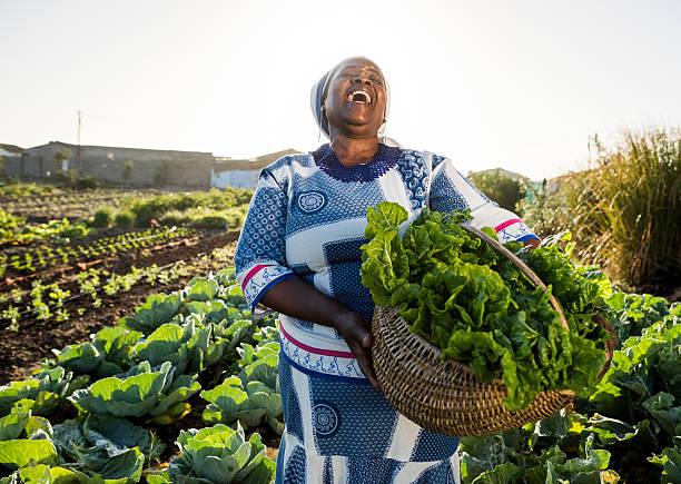 afrikanische frau lachen - bauernberuf stock-fotos und bilder