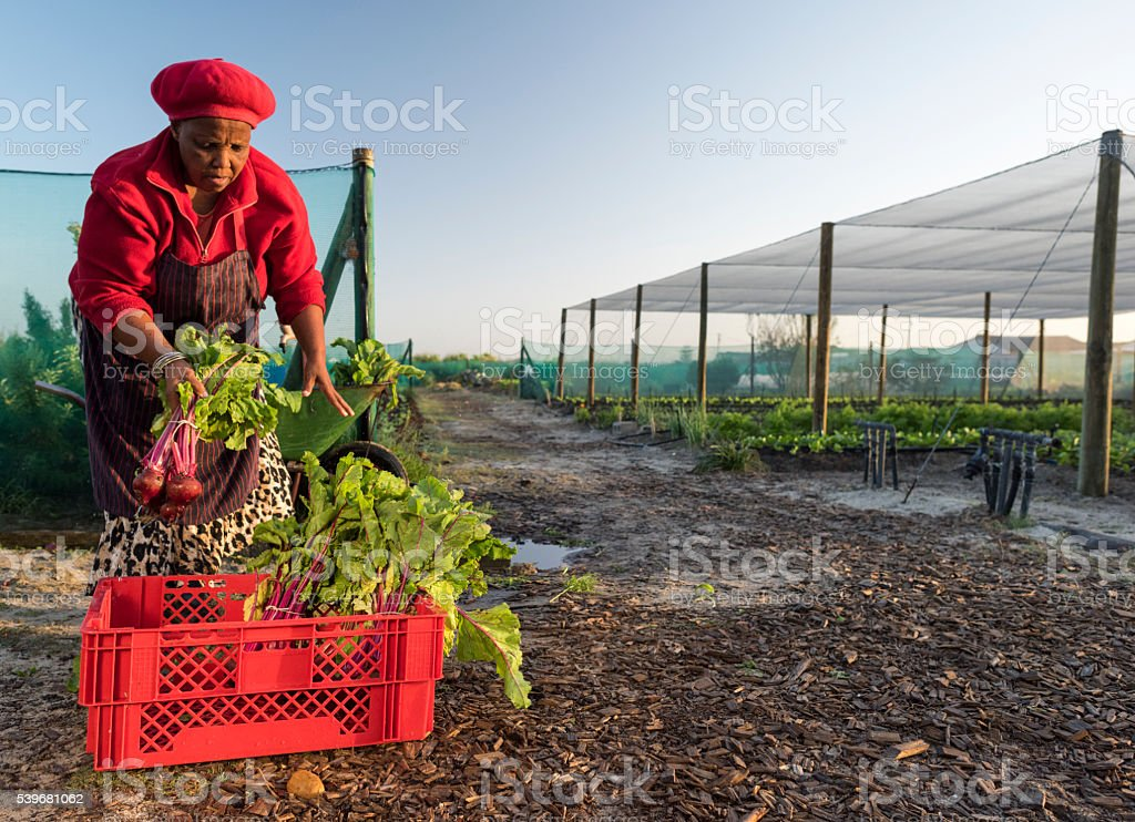 African woman packing crate with vegetables stock photo
