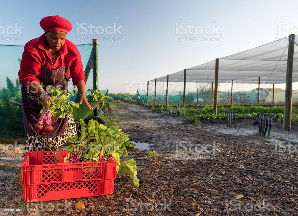 Mujer africana Caja con verduras de embalaje - foto de stock