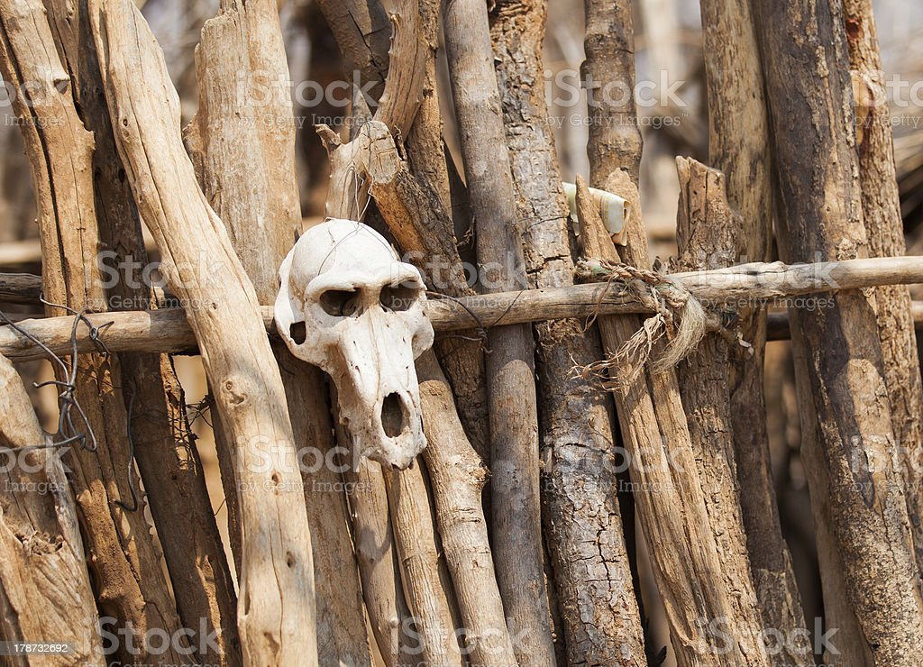 African wooden fence with a baboon skull ornament royalty-free stock photo