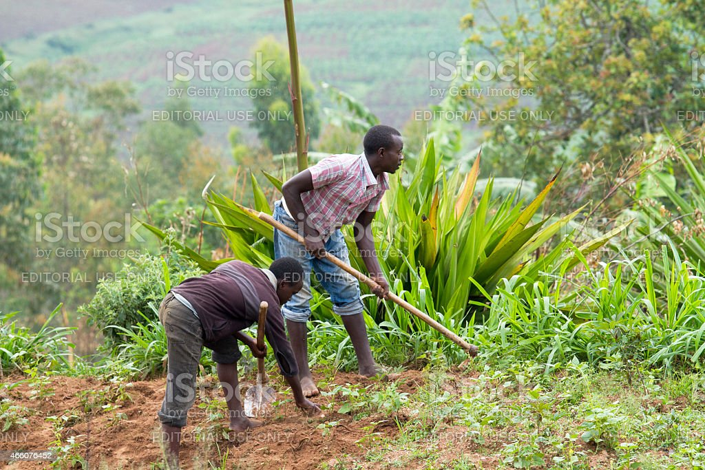 african worker stock photo