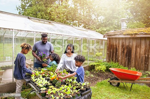 African-American family with three children working together at backyard plant nursery