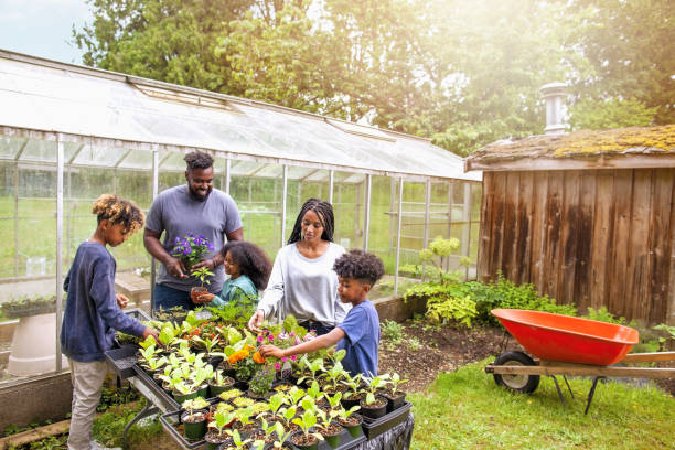 African-American family with three children working together at backyard plant nursery stock photo
