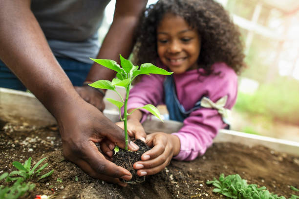 African-American father and daughter holding small seedling at community garden greenery African-American father and daughter holding small seedling at community garden greenery gardening stock pictures, royalty-free photos & images