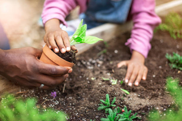 African-American father and daughter planting potted plant at community garden stock photo