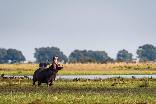 Africa's amazing animals stock photo
