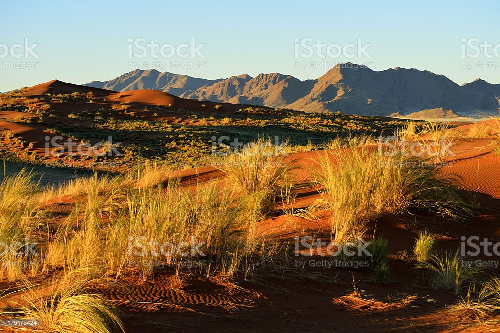 After a lot of rain all dunes got green royalty-free stock photo