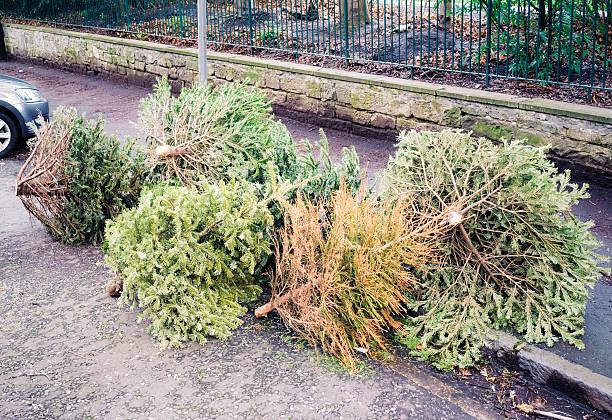 nach weihnachten - alte weihnachtsbäume stock-fotos und bilder