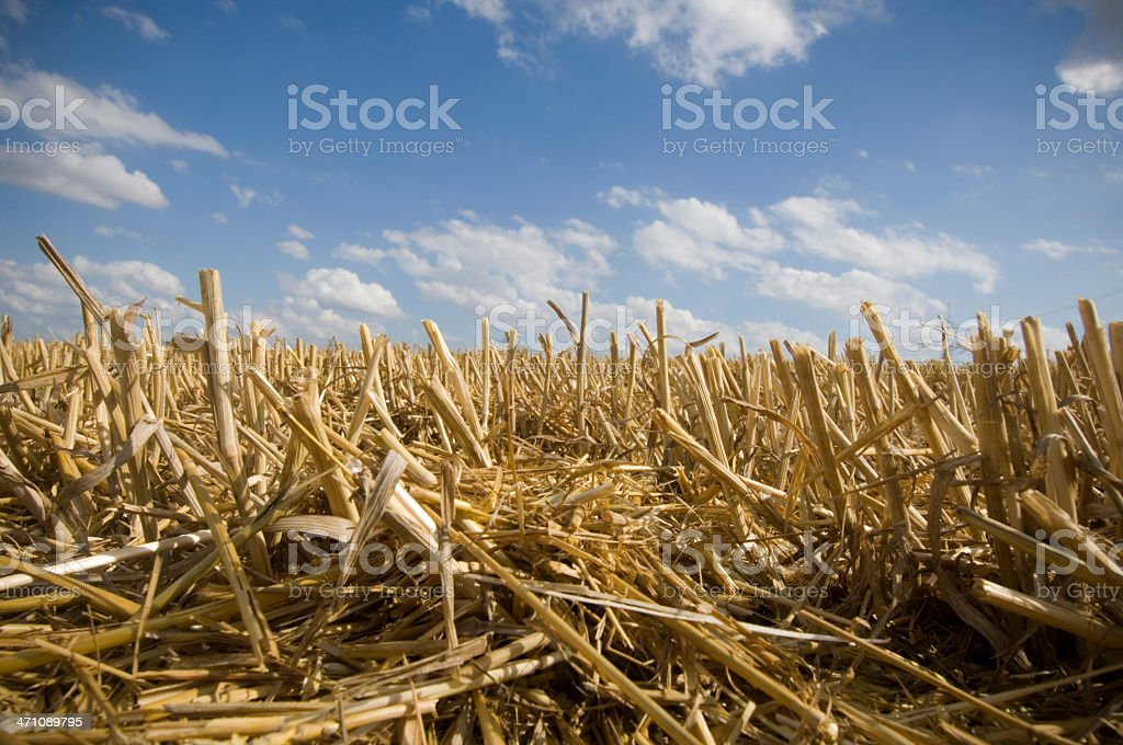 After harvest stock photo