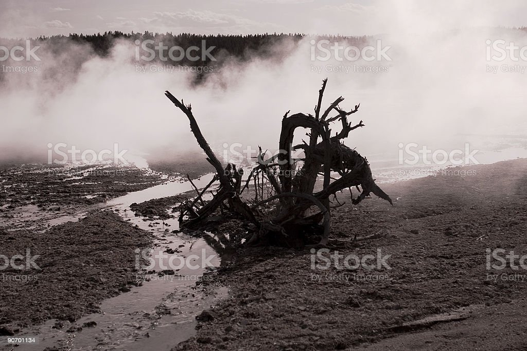 After life royalty-free stock photo