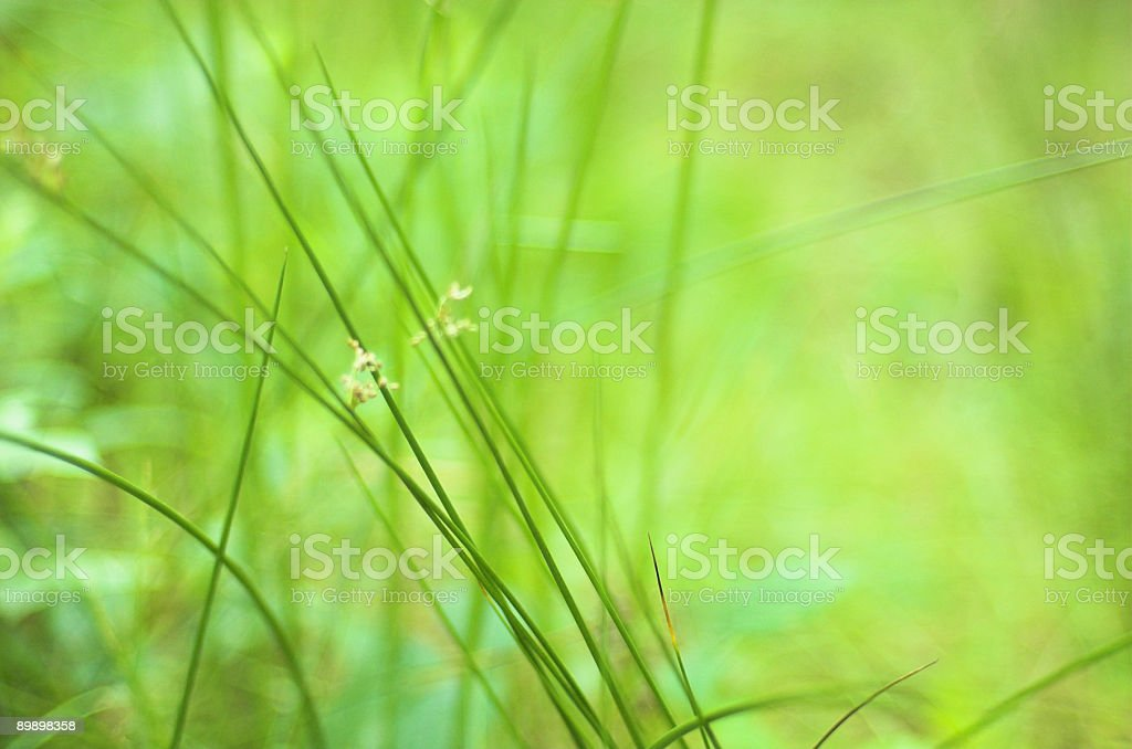 After rain royalty-free stock photo
