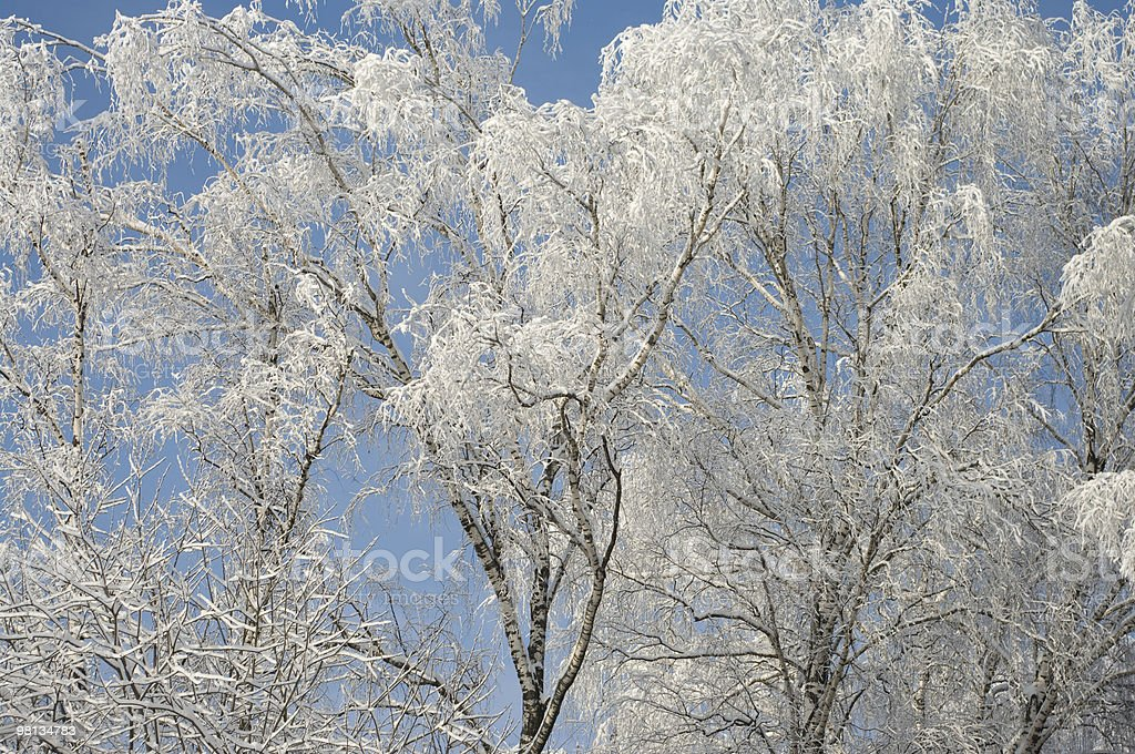 After snowfall royalty-free stock photo